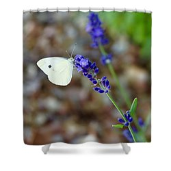 Butterfly And Lavender Shower Curtain