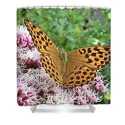 Butterfly Argynnis Paphia  Shower Curtain