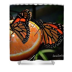 Butterfly Attraction Shower Curtain