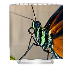 Butterfly Closeup Shower Curtain by Christopher Holmes