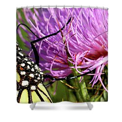 Butterfly On Bull Thistle Shower Curtain