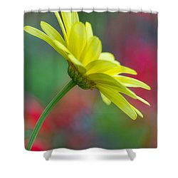 Butterfly Daisy Shower Curtain
