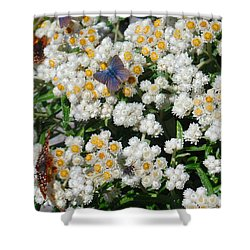 Butterfly Extravaganza Shower Curtain by Karen Molenaar Terrell