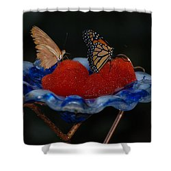 Shower Curtain featuring the photograph Butterfly Fruit by Richard Bryce and Family
