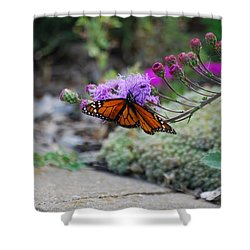 Shower Curtain featuring the photograph Butterfly Garden by Ramona Whiteaker