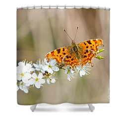 Butterfly Shower Curtain by Gary Bridger