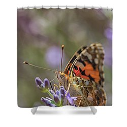 Shower Curtain featuring the photograph Butterfly In Close Up by Patricia Hofmeester