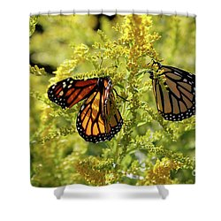 Butterfly In Fall  Shower Curtain
