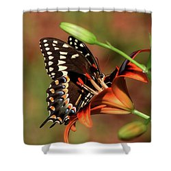 Butterfly Kiss 2 Shower Curtain