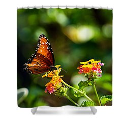 Butterfly On A Flower Shower Curtain