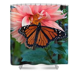 Butterfly On Dahlia Shower Curtain