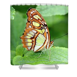 Butterfly On Leaf Shower Curtain