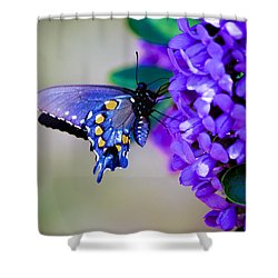 Butterfly On Mountain Laurel Shower Curtain