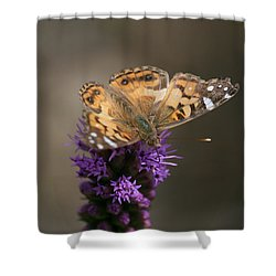 Shower Curtain featuring the photograph Butterfly In Solo by Cathy Harper