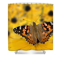 Butterfly On Rudbeckia Shower Curtain