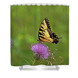 Shower Curtain featuring the photograph Butterfly On Thistle by Sandy Keeton