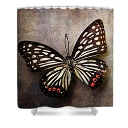 Butterfly Over Textured Background Shower Curtain