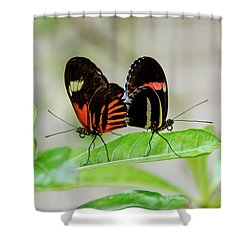 Butterfly Pair Shower Curtain