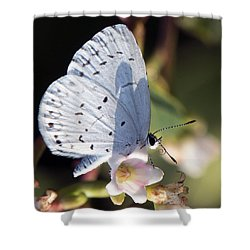 Shower Curtain featuring the photograph Butterfly Pose by Stephen Flint