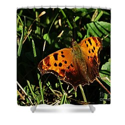 Shower Curtain featuring the photograph Butterfly Question by J L Zarek