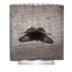 Butterfly See Through Shower Curtain