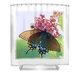 Butterfly Summer 3 Shower Curtain