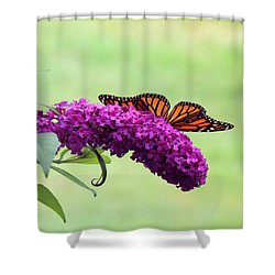 Shower Curtain featuring the photograph Butterfly Wings by Teresa Schomig