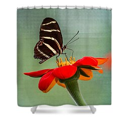 Butterfly Zebra Longwing On Zinnia Shower Curtain
