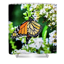 Butterfly2 Shower Curtain