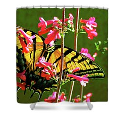 Butterfly's Dream Shower Curtain