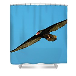 Buzzard Circling Shower Curtain by Mike Dawson