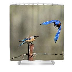Buzzing By Shower Curtain by Mike Dawson