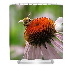 Buzzing The Coneflower Shower Curtain