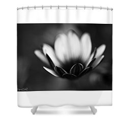 #bw #closeup #petals #someyearsago Shower Curtain