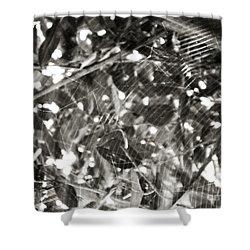 Shower Curtain featuring the photograph Bw Cobweb Tree by Megan Dirsa-DuBois