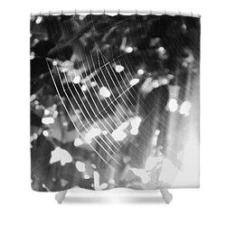 Shower Curtain featuring the photograph Bw Gossamer Glow by Megan Dirsa-DuBois