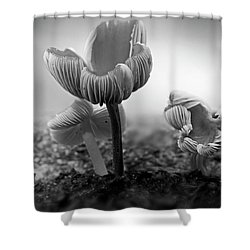 Bw Mushroom - 365- 232 Shower Curtain by Inge Riis McDonald