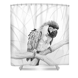 Shower Curtain featuring the drawing Bw Parrot by Phyllis Howard