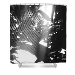 Shower Curtain featuring the photograph Bw Radiance by Megan Dirsa-DuBois