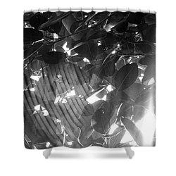 Shower Curtain featuring the photograph Bw Shadow Threads by Megan Dirsa-DuBois