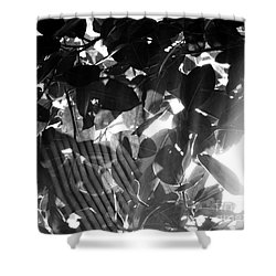 Shower Curtain featuring the photograph Bw Spider Phenomena by Megan Dirsa-DuBois