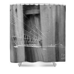 Shower Curtain featuring the photograph Bw Spiderweb by Megan Dirsa-DuBois