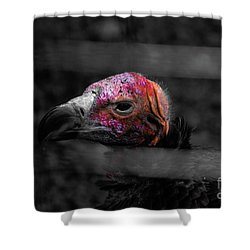 Bw Vulture - Wildlife Shower Curtain