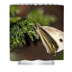 Cabbage Butterfly On Evergreen Bush Shower Curtain