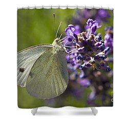 Shower Curtain featuring the photograph Cabbage White Butterfly by Inge Riis McDonald
