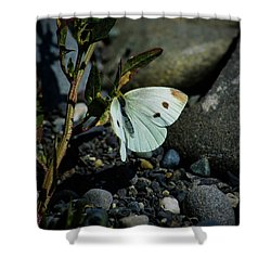Shower Curtain featuring the photograph Cabbage White Butterfly by Tikvah's Hope