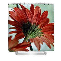 Cabrera Daisy Shower Curtain