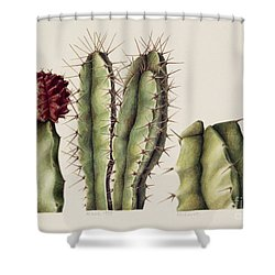 Cacti Shower Curtain