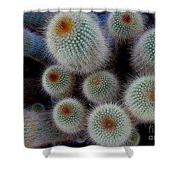Cacti Family Shower Curtain