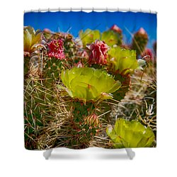 Shower Curtain featuring the digital art Cactus At The End Of The Road by Bartz Johnson